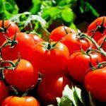 Tomaten gießen - so geht´s richtig
