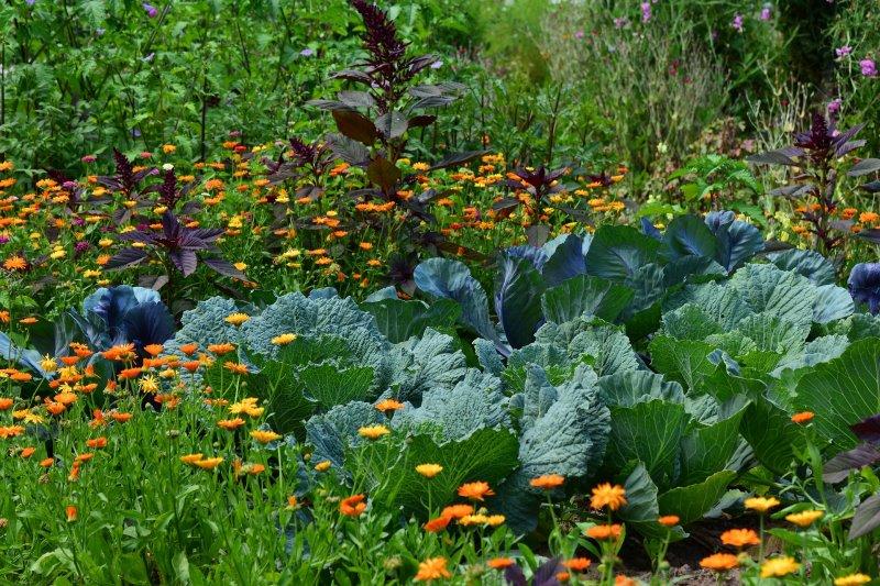 Ein Gemüsegarten