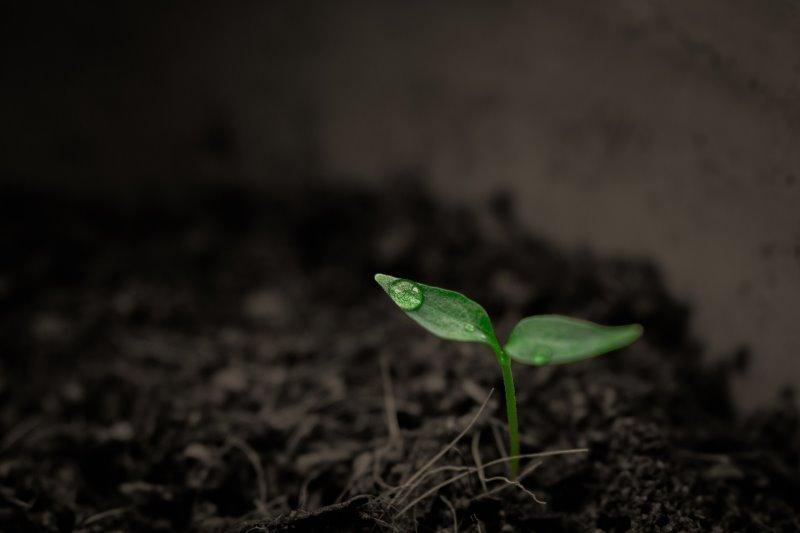 Ein kleiner Setzling in Pflanzenerde