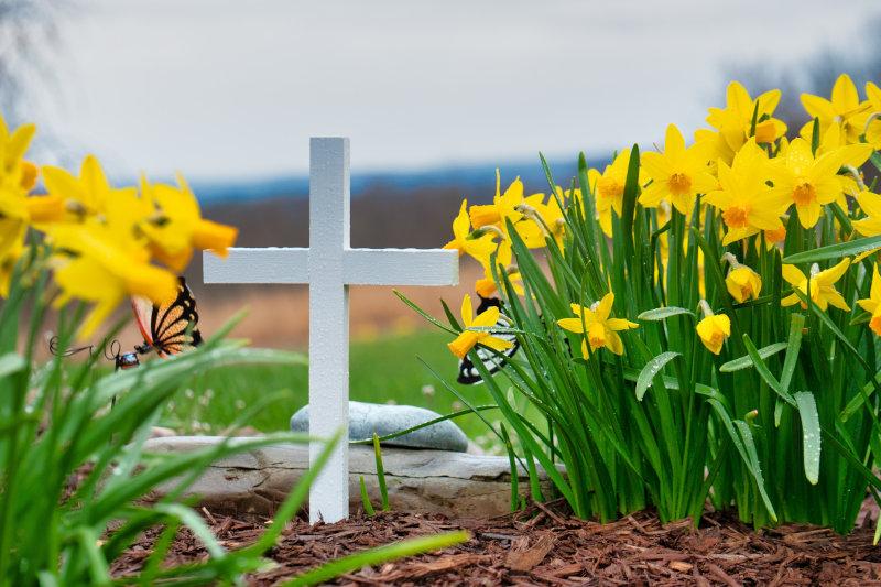 Rindenmulch liegt auf einem Grab mit weißem Kreuz
