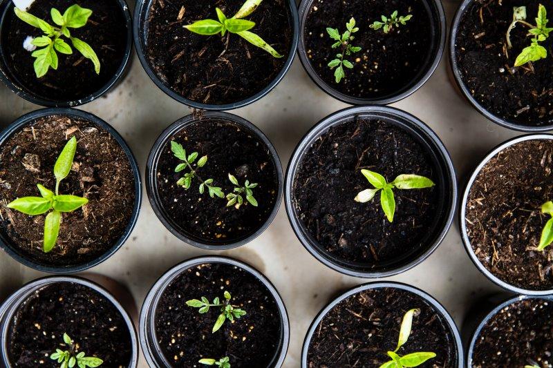 Pflanzen sind in Anzuchterde eingepflanzt