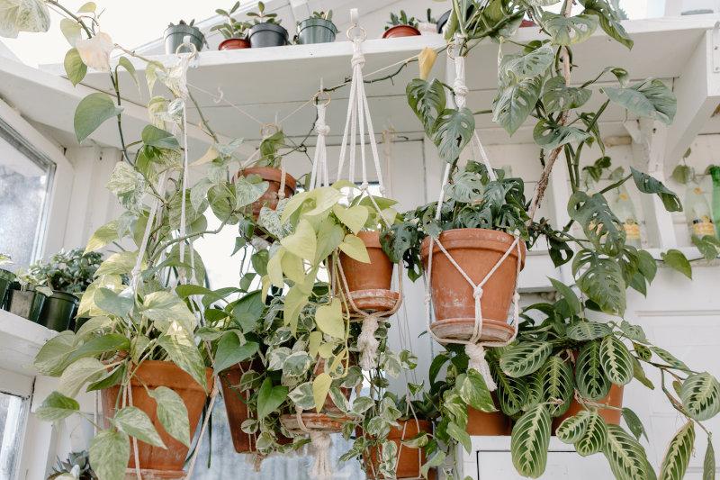 Mehrere Makramee-Blumenampeln mit Pflanzen in Blumentöpfen.