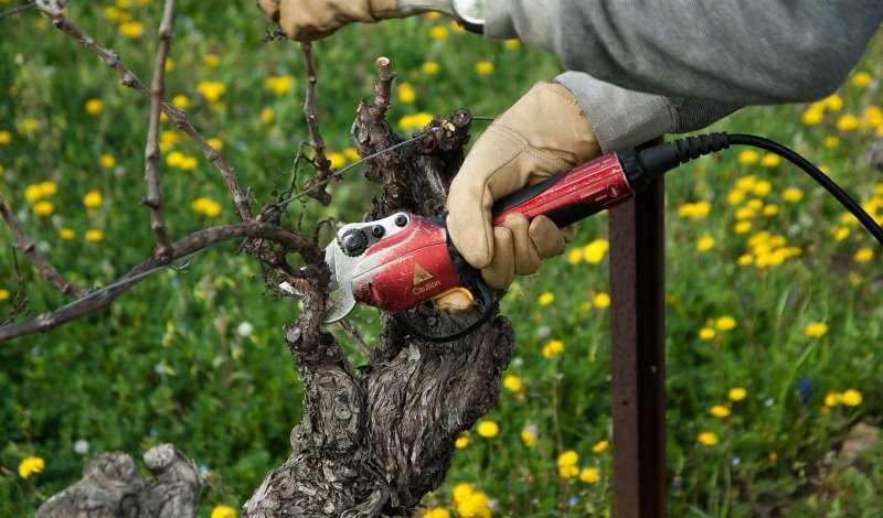 Ein Mann schneidet Äste mit einer elektrischen Gartenschere ab.