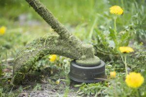 Ein Freischneider schneidet Gras und Löwenzahn.