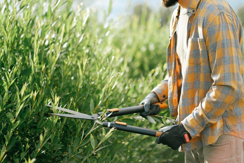 Gärtner stutzt Sträucher mit einer Strauchschere