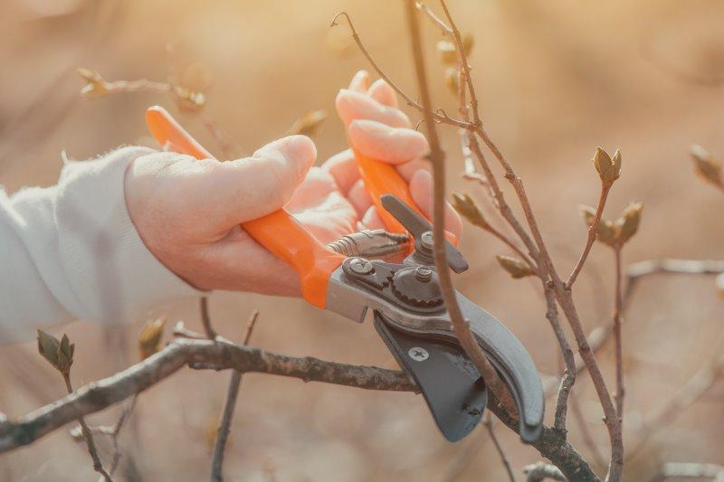 Gärtnerin schneidet mit Gartenschere mit Bypass-System einen Kirschzweig
