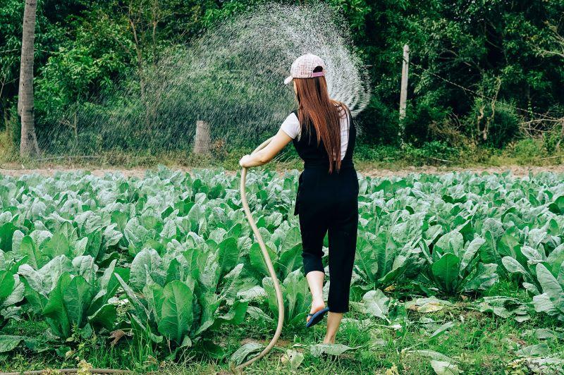 Eine junge Frau bewässert ihr Gemüsebeet