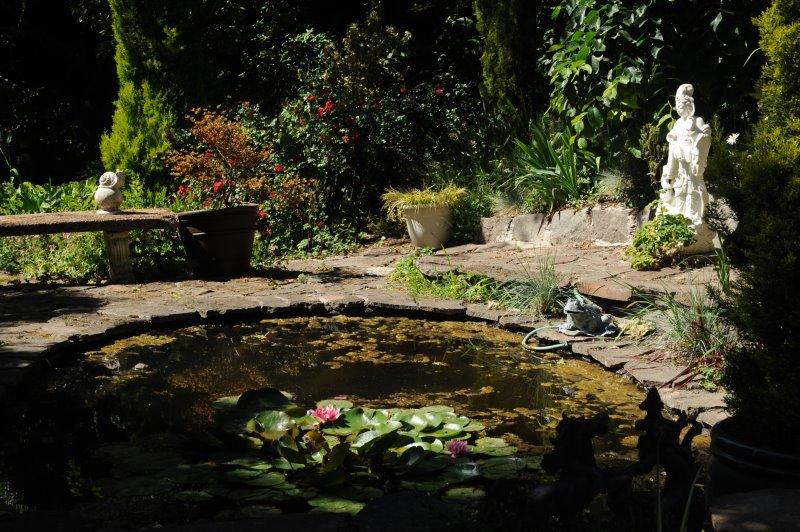 Gartenteich mit Algen und Schmutz