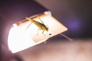 insektenlampe-test