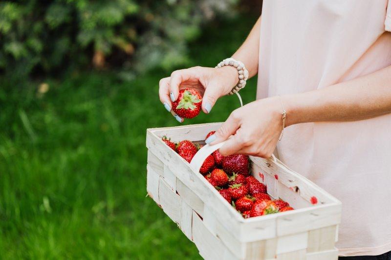 Erntekorb mit Erdbeeren