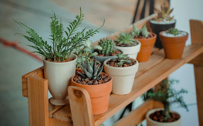 Pflanzenableger in kleinen Blumentöpfen auf einer Pflanzentreppe