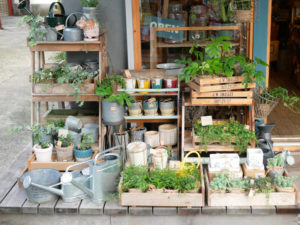 Pflanzentreppen mit Pflanzen und Blumentöpfen