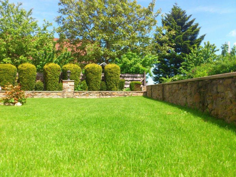 Getrimmter Rasen im Garten