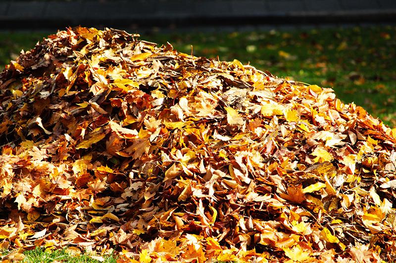 Ein Haufen Blätter