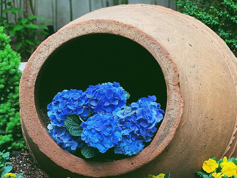 Ein auf die Seite gelegter Pflanzkübel mit blauen Hortensien drin