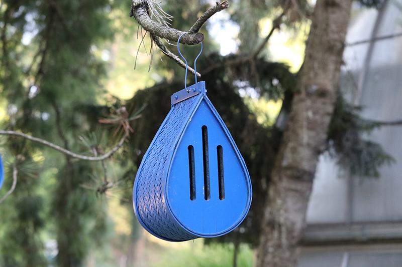 Ein blaues Schmetterlingshaus an einem Nadelbaum
