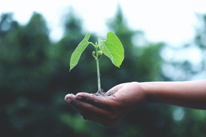 Eine Hand, die eine kleine Pflanze trägt