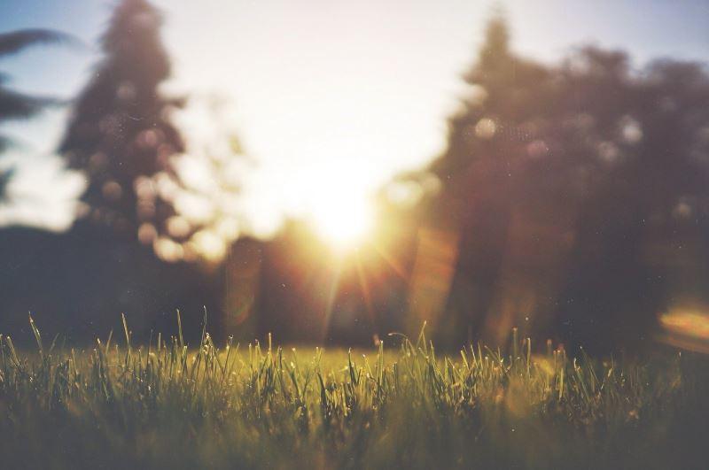 Gepflegter Rasen im Sonnenuntergang