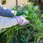 gartenabfall-gruen-handschuhe-abfall