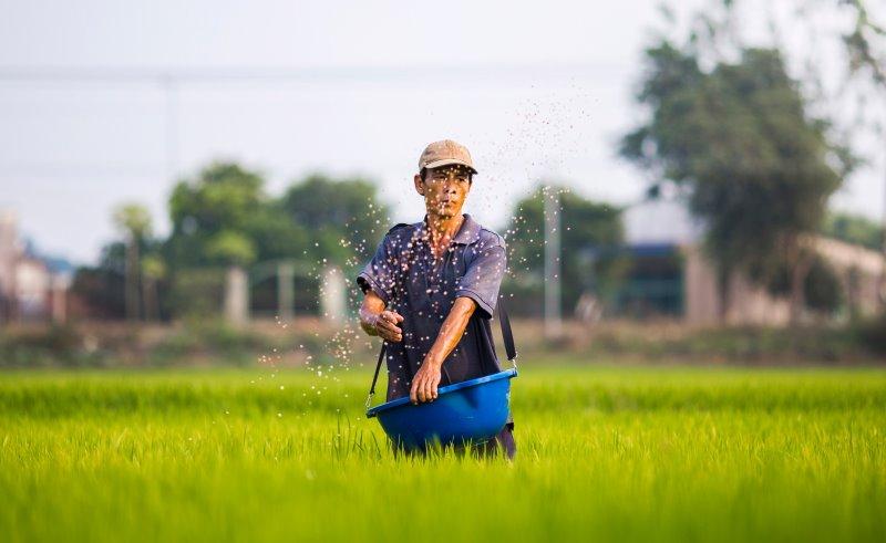 Ein Mann sät Samen auf einer Wiese