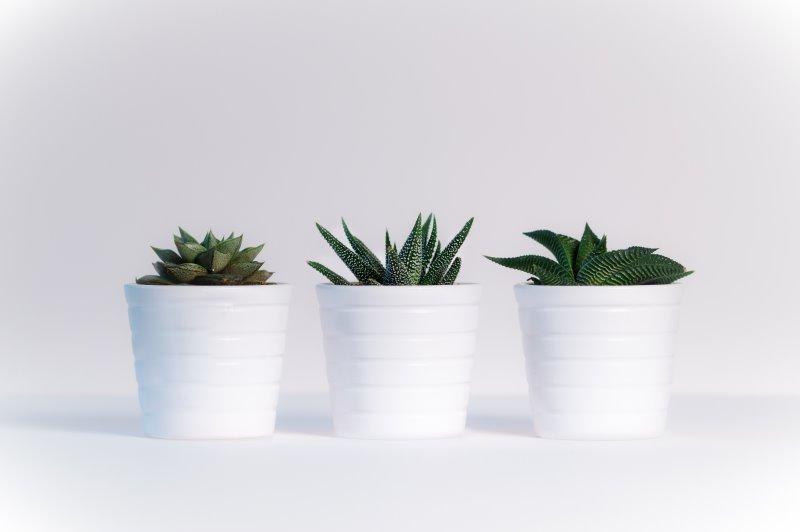 3 weiße Blumentöpfe mit Kakteen