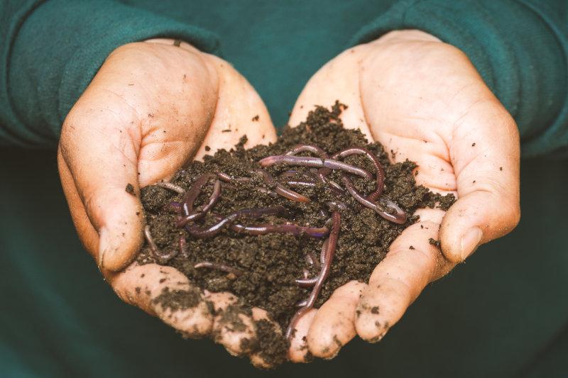 Organischer Biodünger
